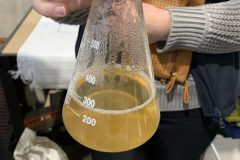 "Sweet liquid called ""wort"", this comes directly from hot water that has been filtered through malted barley."